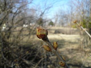 wiosna2.jpg