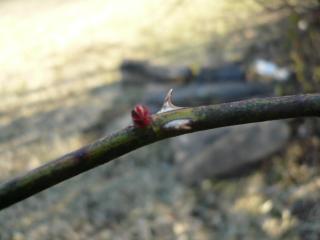 wiosna3.jpg